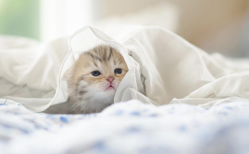 枕以外の睡眠の質向上のポイント