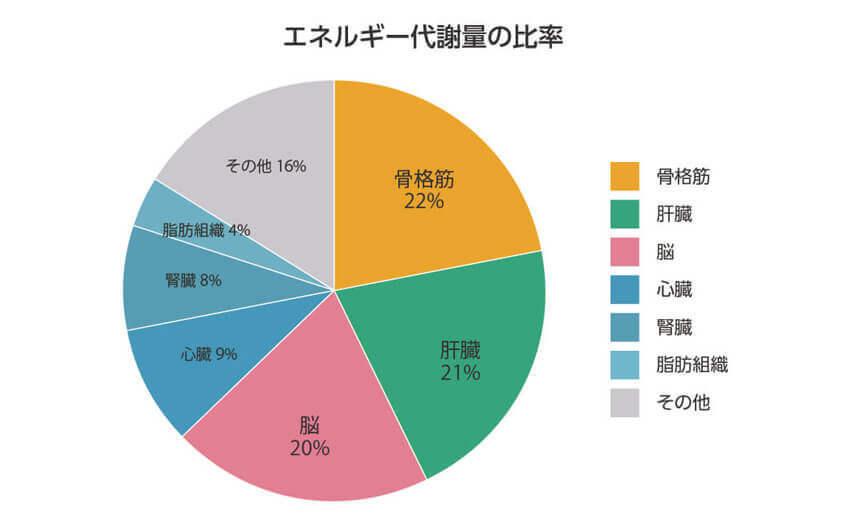 エネルギー代謝量の比率 骨格筋22% 肝臓21% 脳20% 心臓9% 腎臓8% 脂肪組織4% その他16%