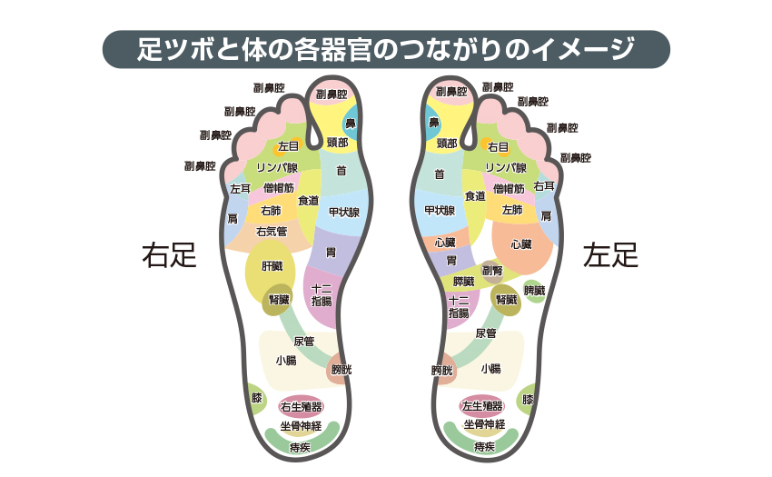 足ツボと体の各器官のつながりのイメージ