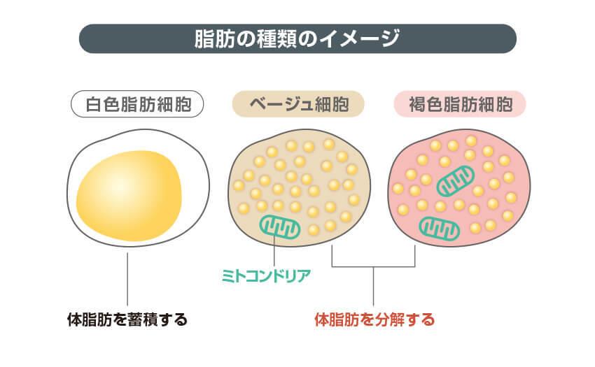 脂肪の種類のイメージ