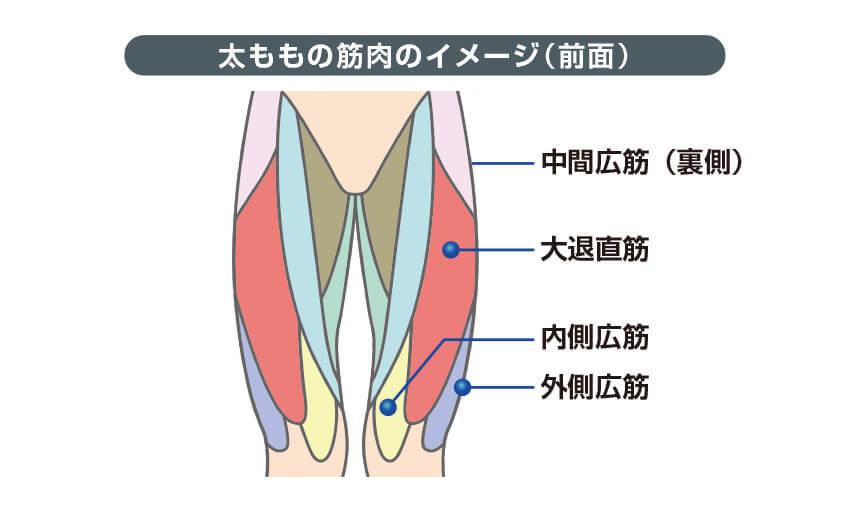 太ももの筋肉のイメージ(前面)