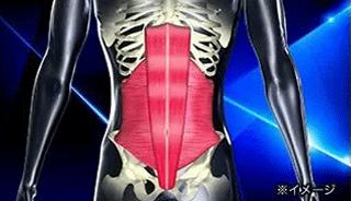複数の筋肉でコルセットのようにお腹周りを支えています|スレンダートーン フィットプラス