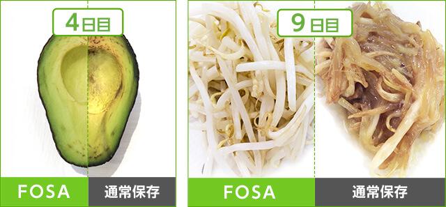 4日目 FOSA 通常保存 9日目 FOSA 通常保存