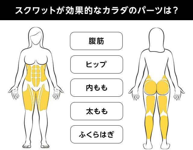 スクワットが効果的なカラダのパーツは? 腹筋 ヒップ 内もも 太もも ふくらはぎ POINT 大きな筋肉をしっかり動かすために、正しい姿勢でスクワットをすること!