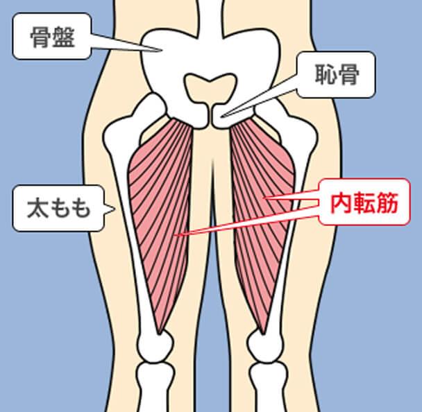 骨盤底筋群の筋肉量をアップさせる